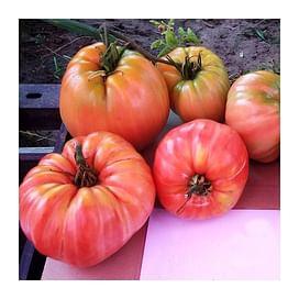 Сердце Прекрасной Горы F1 (OXHEART BELMONTE F1) семена томата индетерминантного 250 семян Esasem/Эзасем