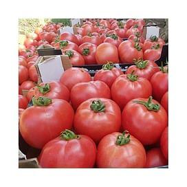 Пинк Роуз F1 семена томата индетерминантного розового Yuksel/Юксел