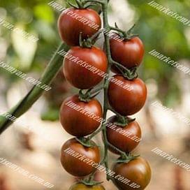 Тайгер F1 семена томата индетерминантного Yuksel/Юксел