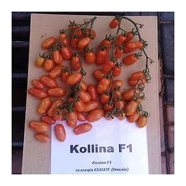 Колина F1 (Коллина F1) семена томата индетерминантного 250 семян Esasem/Эзасем