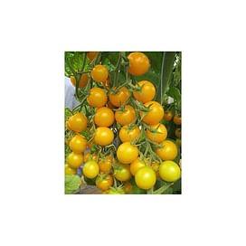 СТАР ГОЛД F1 семена томата индетерминантного Черри желтого Esasem/Эзасем