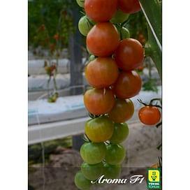 Арома F1 семена томата Черри Yuksel/Юксел