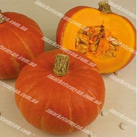 Брайт Саммер F1 семена тыквы тип Ред Кури ультраранней 500 семян Enza Zaden/Энза Заден
