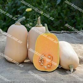 Тиана F1 семена тыквы тип Баттернат ранней 500 семян Enza Zaden/Энза Заден
