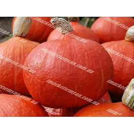 Оранж Саммер F1 семена тыквы тип Uchiki Kuri ранней Enza Zaden/Энза Заден
