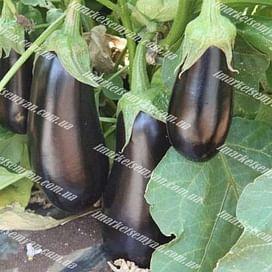 Мадалена F1 семена баклажана среднего 1 000 семян Vilmorin/Вилморин