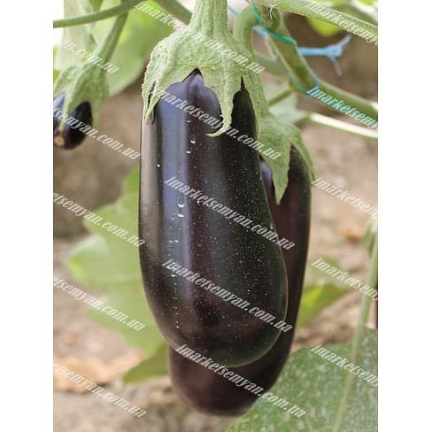 Эльдорадо F1 семена баклажана 1 000 семян LibraSeeds