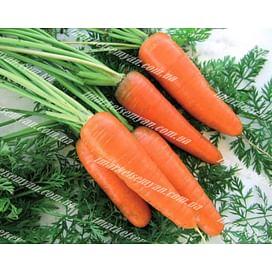 Эмперор F1 семена моркови Шантане средней 100 000 семян Vilmorin/Вилморин