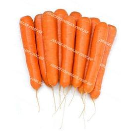 Октаво F1 (VD калибр.16-18мм) семена моркови Нантес средней 100 000 семян Vilmorin/Вилморин