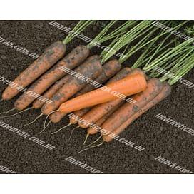 Эксельсо F1 семена моркови Нантес средней Vilmorin/Вилморин