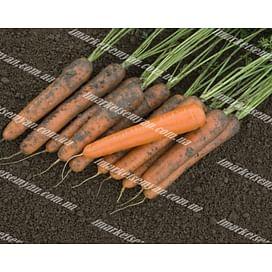 Эксельсо F1 (VD) семена моркови Нантес средней 100 000 семян Vilmorin/Вилморин