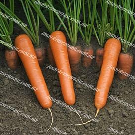 Маэстро F1 семена моркови Нантес поздней 100 000 семян Vilmorin/Вилморин