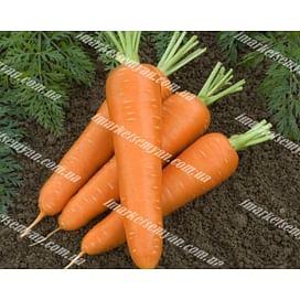 Олимпо F1 (VD калибр. 16-18 мм) семена моркови Шантане поздней 100 000 семян Vilmorin/Вилморин