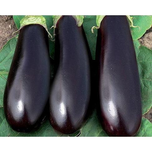 Фабина F1 семена баклажана раннего Clause/Клоз