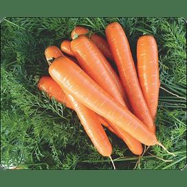 Брилианс F1 семена моркови Нантес (1,6-1,8) среднепоздней 100 000 семян Nunhems
