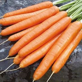 Элеганс F1 семена моркови Нантес (1,4-1,6) поздней 100 000 семян Nunhems