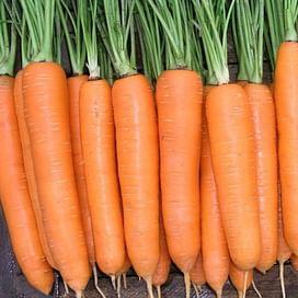 Колтан F1 семена моркови Нантес/Флакке (1,6-1,8) поздней 100 000 семян Nunhems