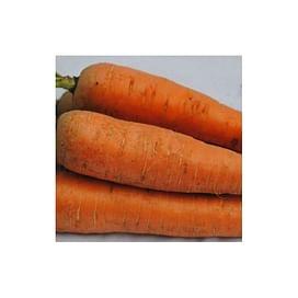Курода семена моркови Шантане Италия Semenaoptom/Семенаоптом