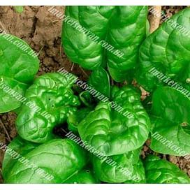 Вип семена шпината овального NongWoo Bio