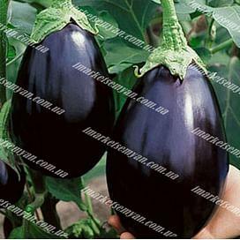 Черный красавец семена баклажана среднего 25 грамм Semenaoptom/Семенаоптом