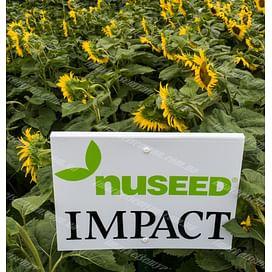 Импакт семена подсолнечника масличного линолевого 1 мешок Nuseed