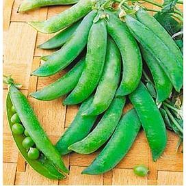 Бинго семена гороха овощного позднего 100 000 семян Syngenta/Сингента