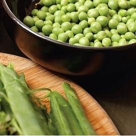 Ламбадо семена гороха овощного раннего Syngenta/Сингента