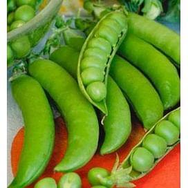 Грунди семена гороха овощного позднего 100 000 семян Syngenta/Сингента