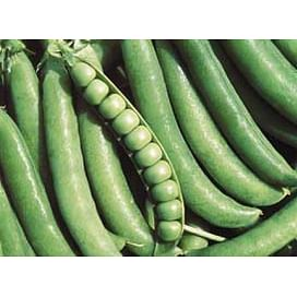 Джоф семена гороха овощного ультрапозднего 100 000 семян Syngenta/Сингента