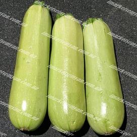 Элеонор F1 семена кабачка раннего светло-зеленого 500 семян United Genetics