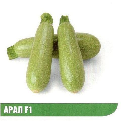 Арал F1 семена кабачка раннего Sakata/Саката