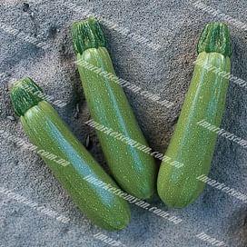 Мостра F1 семена кабачка раннего 500 семян Clause/Клоз