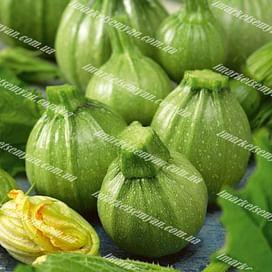 Раунд Бьюти F1 семена кабачка раннего светло-зеленого United Genetics