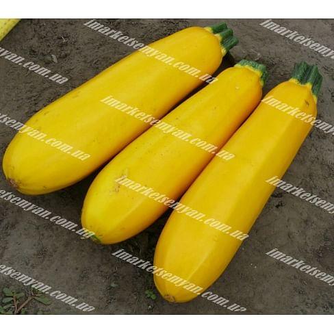 Голдстика F1 семена кабачка 500 семян Lark Seeds/Ларк Сидс