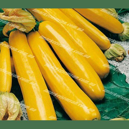 Санлайт F1 семена кабачка раннего Clause/Клоз