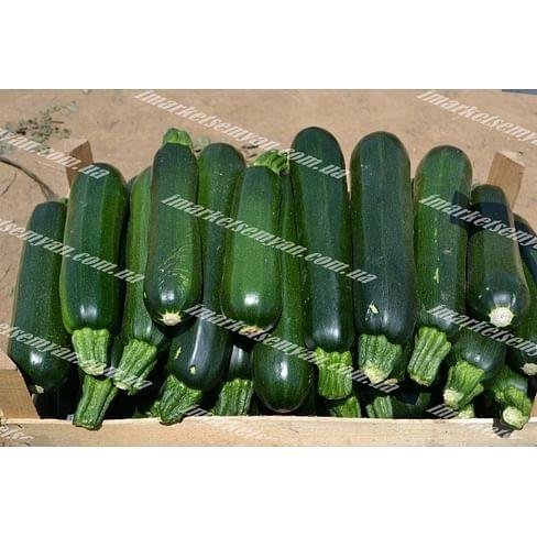 Базальт F1 семена кабачка 43 дн. темно-зеленого 500 семян Lark Seeds/Ларк Сидс