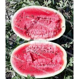 Марана F1 семена арбуза тип Кримсон Свит раннего 1 000 семян LibraSeeds