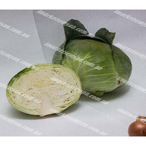 Ультиматум F1 семена капусты белокочанной среднеранней LibraSeeds