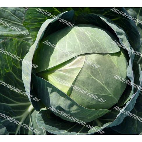Церокс F1 семена капусты белокочанной среднеранней 2 500 семян Bejo/Бейо