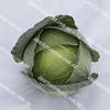 Кататор F1 семена капусты белокочанной средней 2 500 семян Syngenta/Сингента