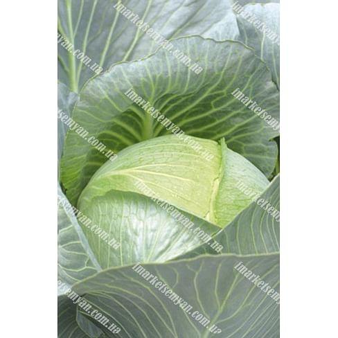Эмпаер F1 семена капусты белокочанной поздней 2 500 семян NongWoo Bio