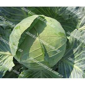 Билбо F1 семена капусты белокочанной ранней 2 500 семян NongWoo Bio
