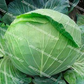 Алина F1 семена капусты белокочанной ранней NongWoo Bio