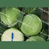 Кастелло F1 семена капусты белокочанной среднеранней (калибр.) 2 500 семян Hazera