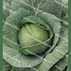 Годвари F1 семена капусты белокочанной ранней 1 000 семян Clause/Клоз