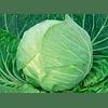 Килагрег F1 семена капусты белокочанной среднеранней 2 500 семян Syngenta/Сингента