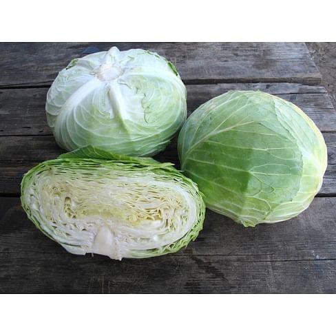 Наоми F1 семена капусты белокочанной средней Kitano/Китано