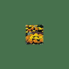 Чикаго Формула микс/Chicago Formula mix семена бархатцев 500 семян Kitano/Китано