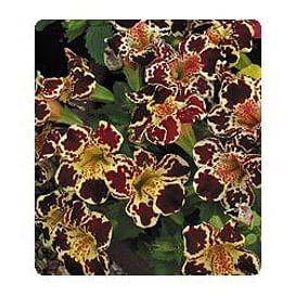 Окинава Formula mixed семена губастика крупноцветкого дражированные 100 семян Kitano/Китано