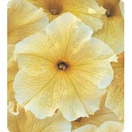 Виртуоз Саншайн (Sunshine) семена петунии крупноцветковой дражированные Kitano/Китано